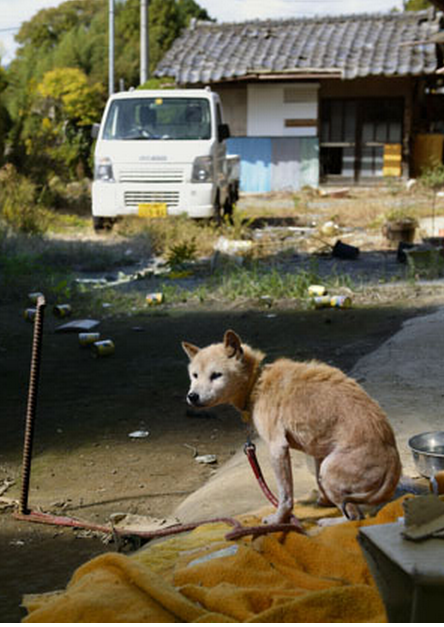 Fukushima Animals