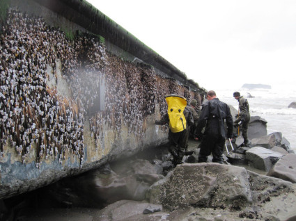 Japanese Dock washes up in Washington