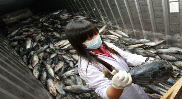 contaminated fish from fukushima japan